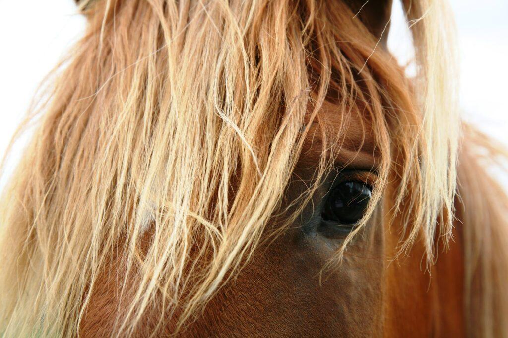 overnachten tussen de paarden dieren